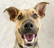 happy_dog_istock_178x156.jpg