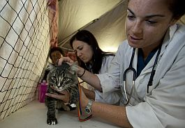 RAVS volunteers examine cat