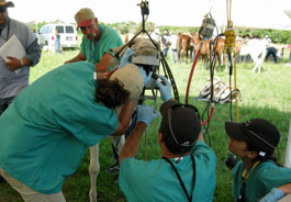 Equine dental work