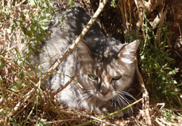 Cat hiding in brush