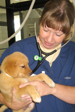 Dr. Barbara Griffin holding a puppy