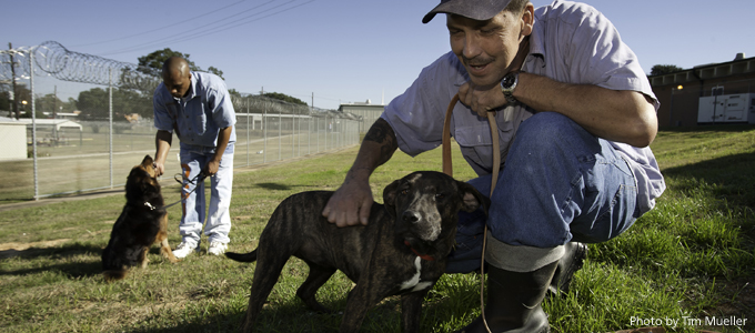 Dixon Correctional Institute inmates play with dogs in their care on the grounds of the medium security prison in Jackson, La. The inmates are part of a partnership with HSUS to help run the Pen Pal Inc. Dog & Cat Shelter and Adoption Center located at the prison.