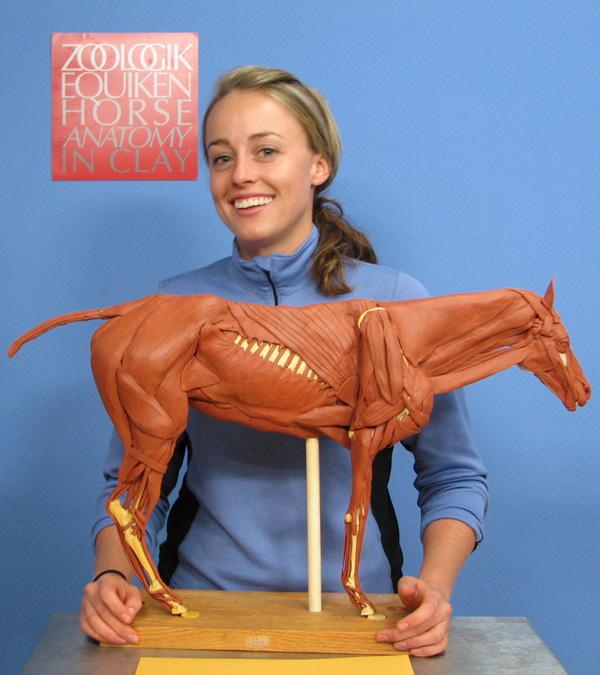 Anatomy In Clay®:A Humane Alternative to the Use of Animals in ...