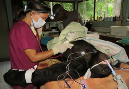 greyesillg_chimpanzee_rescue_center_265x184.jpg