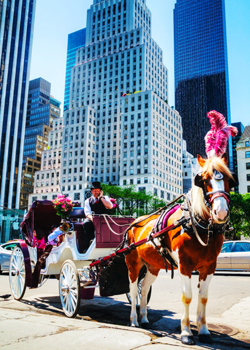 horse_carriage_central_park_250x350.jpg