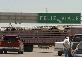 Horses in trailer near U.S.-Mexico border