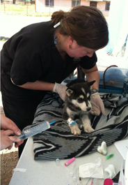 Orion is treated at 2012 San Carlos clinic after HBC accident