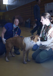 Dr. Berliner examines canine patient, Butterfly Way