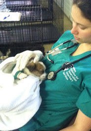 A puppy recovers after surgery