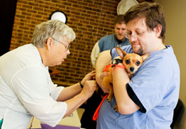 Dog is vaccinated at a 2012 World Spay Day event in North Carolina.