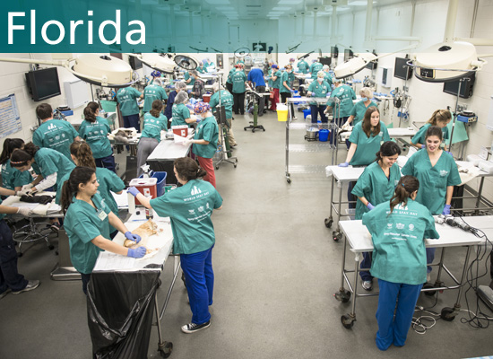 Surgery floor at the 2014 World Spay Day clinic in Florida