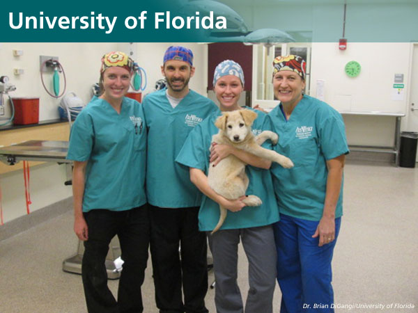 University of Florida World Spay Day 2016 group