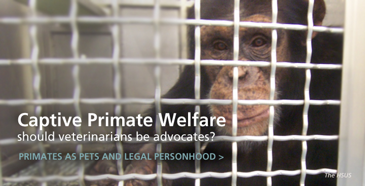 Captive Primate Welfare