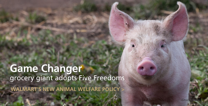 Breaking News: Walmart, Nation's Biggest Food Seller, Adopts Five Freedom Principles for Farm Animals
