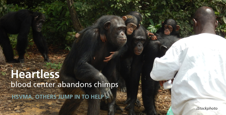 New York Blood Center Abandons Chimpanzees