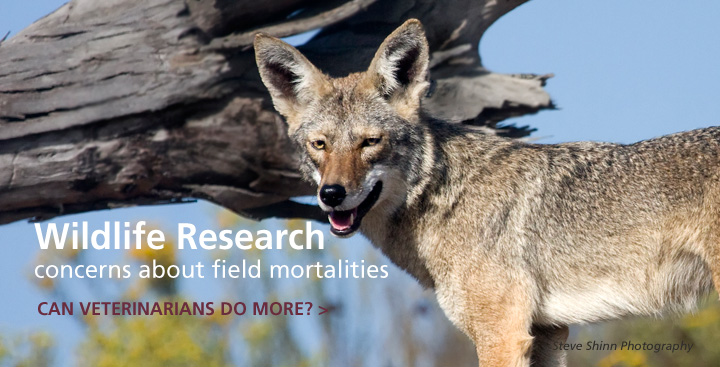 Field Mortalities in Wildlife Research