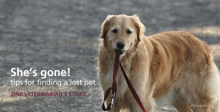 She's Gone! A Veterinarian's Search for His Own Lost Dog