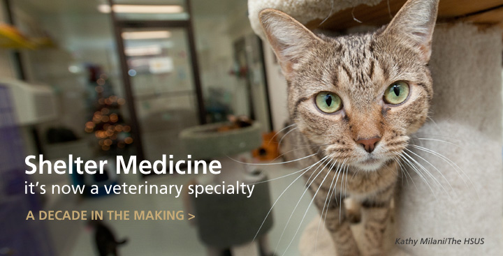 Paving the Road: Shelter Medicine as a Veterinary Specialty