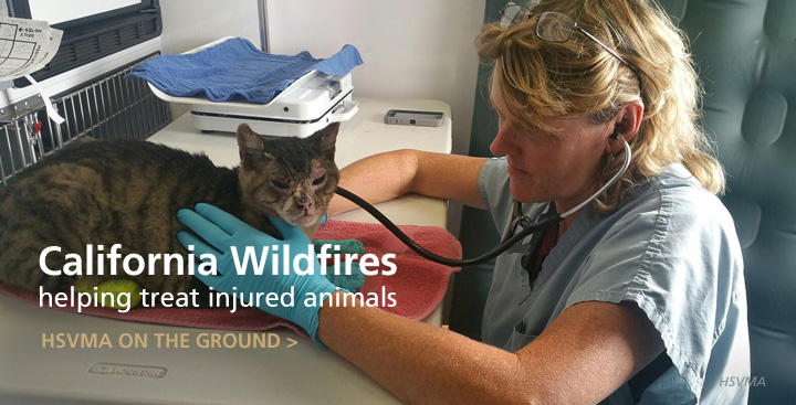 HSVMA Helping Care for Animals Displaced by California Fires