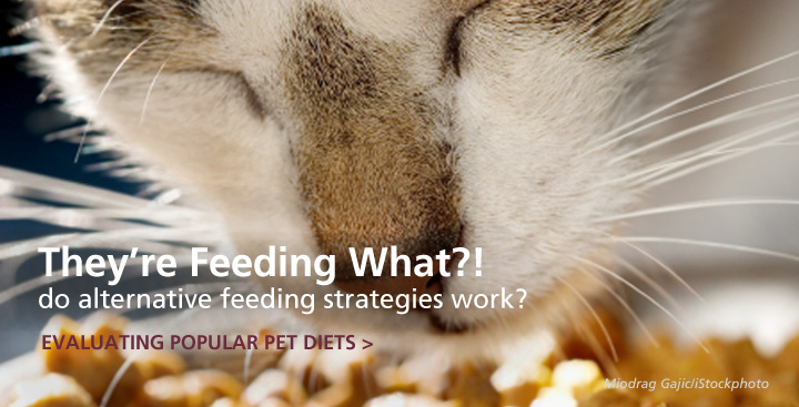 They are Feeding What? Evaluating the Evidence for Popular Small Animal Diets