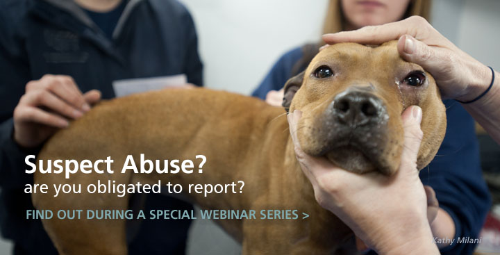 Reporting Suspected Abuse: A Roadmap for the Veterinary Community
