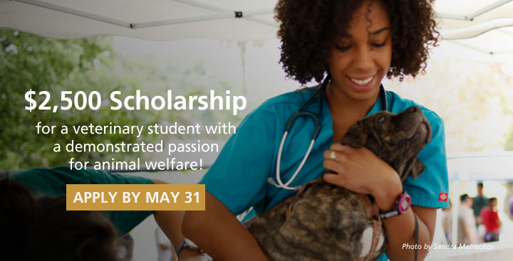 Compassionate Care Veterinary Student Scholarship